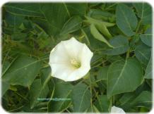 Flower in a park at Delhi