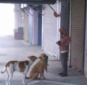 Little boy shares victuals with stray dogs in the winter