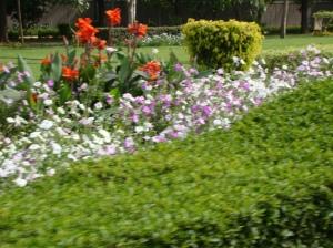 Delhi-Shantipath-Road side flowers