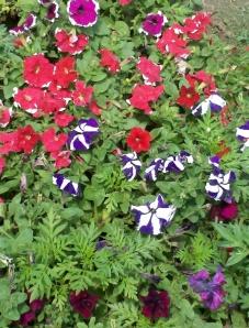 Flowers@Delhi, India