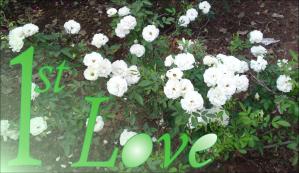 1stLove