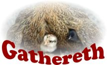 Gathereth