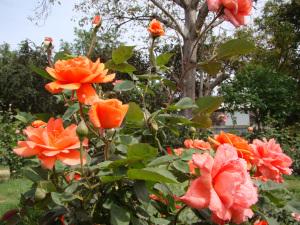 RoseGarden, New Delhi