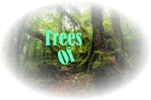 TreesOf